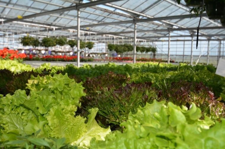 Växthusanläggning i Överby, Eckerö – KONTAKTA MÄKLAREN FÖR PRIS
