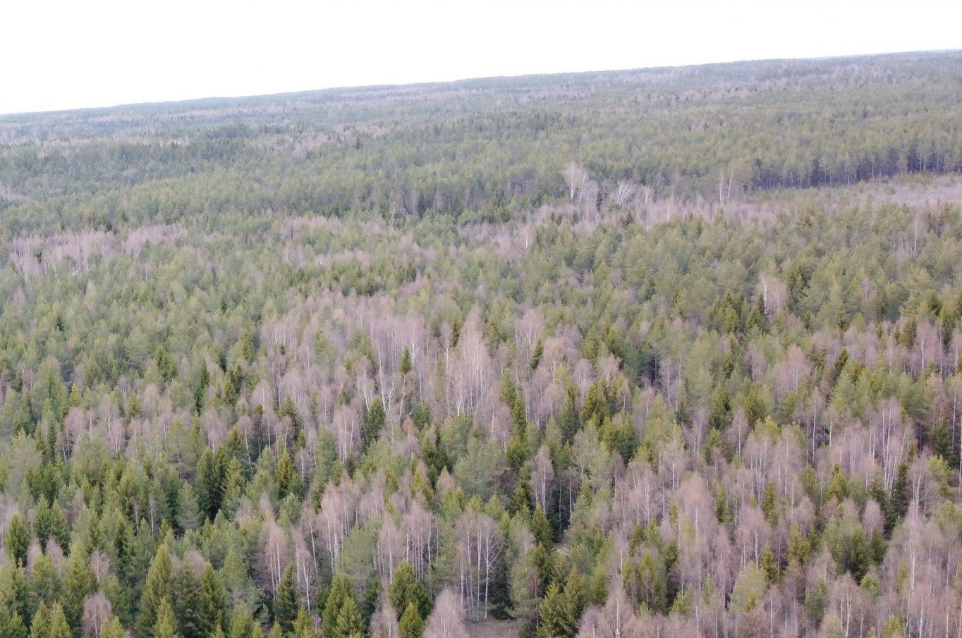 Två skogsskiften i Torp, Eckerö.